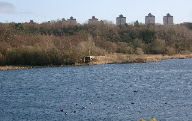 Wildfowl at Baronshaugh RSPB reserve
