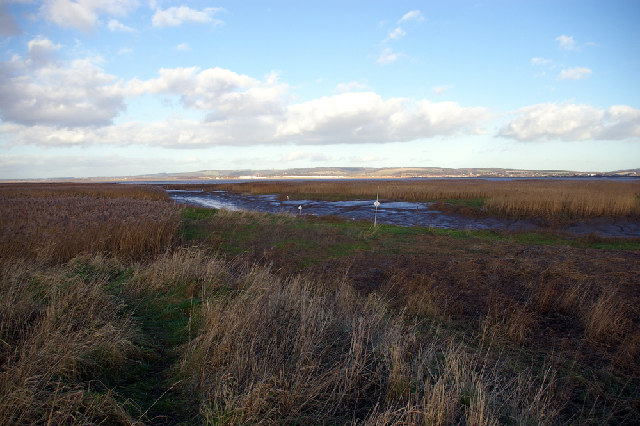 Reed Beds - Mouth of Winteringham Haven