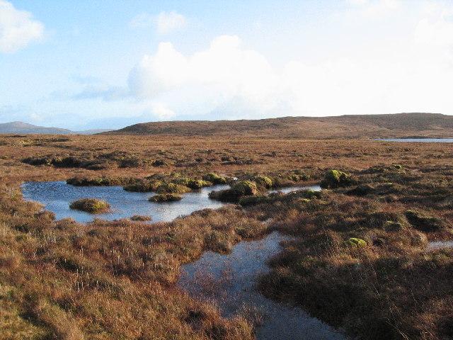 Moorland Bog