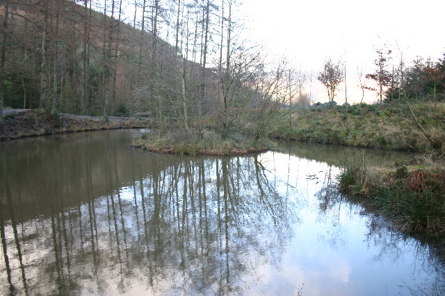 Pond in Whinlatter Forest