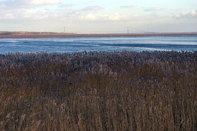 Humber Reed Bed