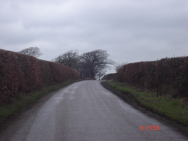 Hedges at Benley Cross