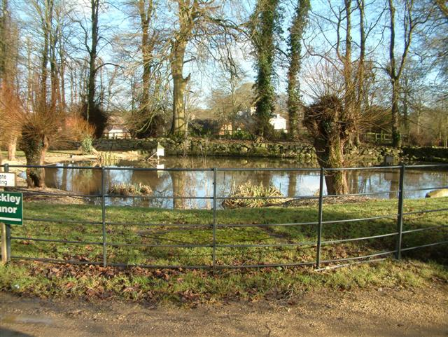 Rockley Duck Pond