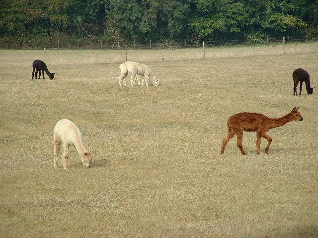 Fields near Whitchurch Hill/ Hill Bottom