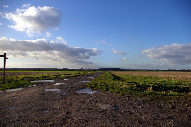Looking towards Willwick Hill Plantation