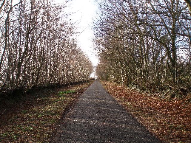 Brendon Hills hedge.