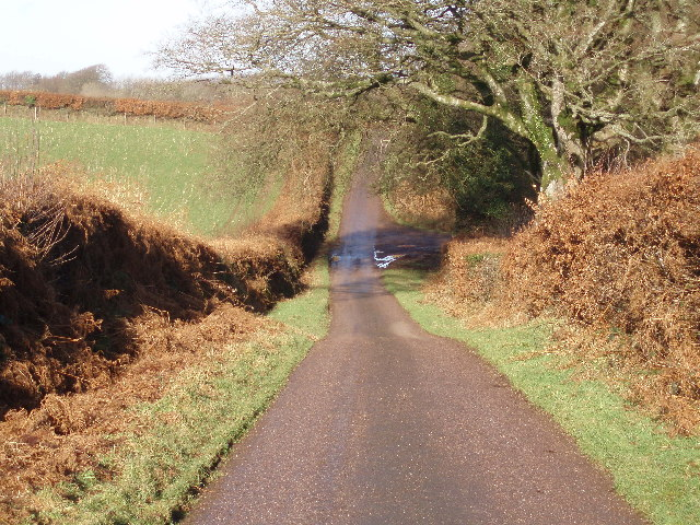 Galloping Bottom Lane