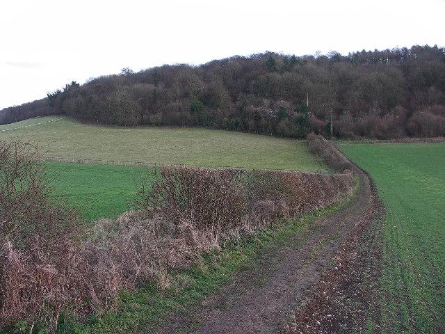 Pophley�s Wood, Stokenchurch