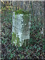 SU7994 : Milestone, Studley Green by David Ellis