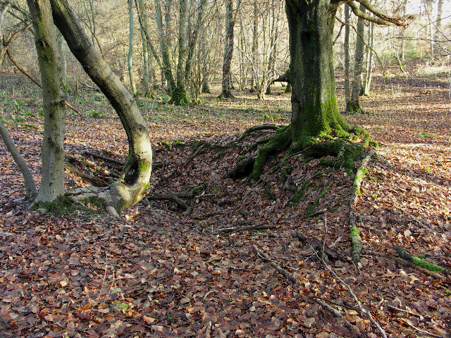 Remains of Sawpit, Bottom Wood