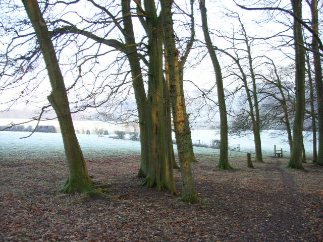 Looking out of Kitesgrove Wood