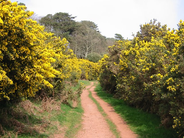 Gorse to the left of me, gorse to the right of me.