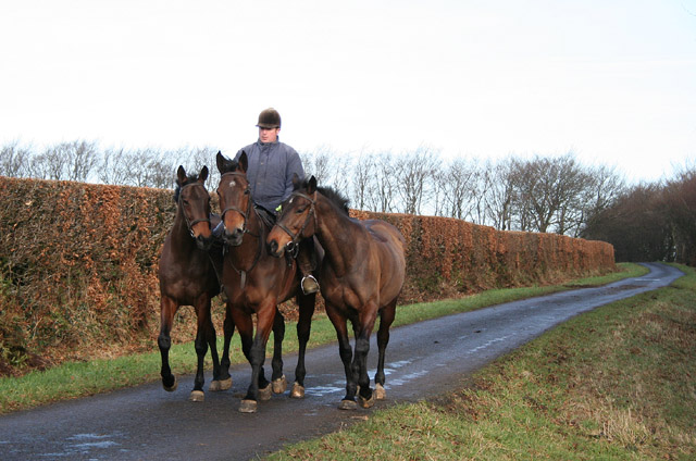 Brompton Regis: exercising three horses near entrance to Burrow Farm