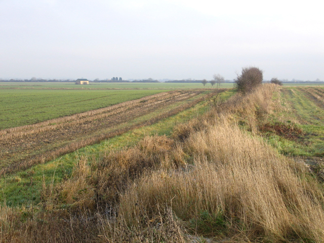 Farmland, Guilden Morden, Cambs