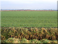 TL2645 : Beds-Cambs county boundary, Wrestlingworth by Rodney Burton