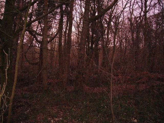 Woodland Hyning Road