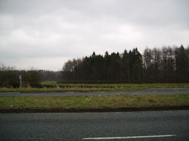 Low Park Wood