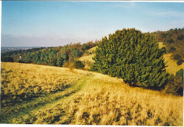 Box Hill - North Face