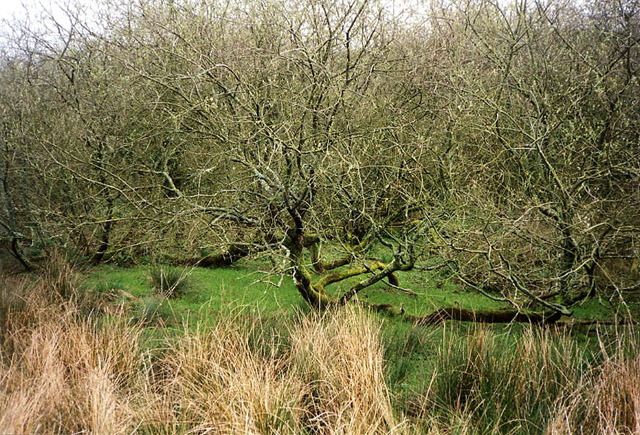 St Ewe: scrub trees and marsh north east of Churchtown