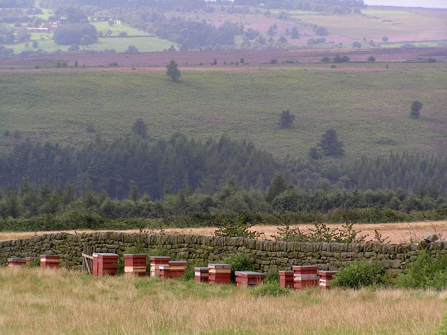 Bee Hives by the moorland heather