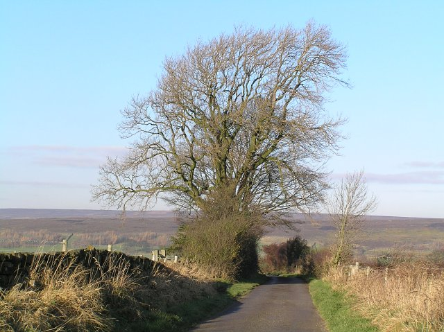 Back Lane Westerdale