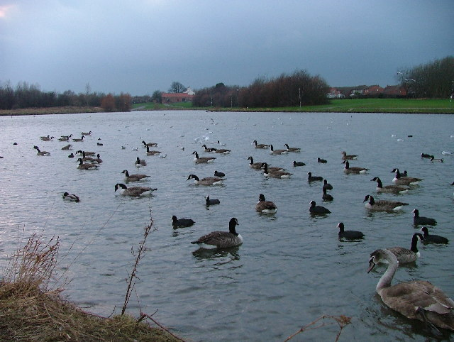 Hemlington Lake, East End