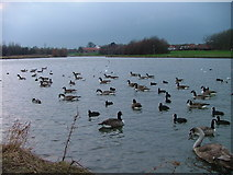 NZ4914 : Hemlington Lake, East End by Mick Garratt