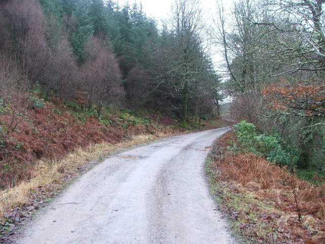 Track through Auchenfraoch Wood.