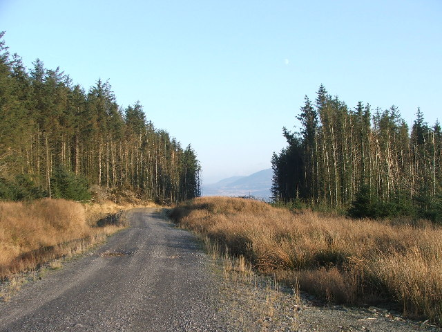 Forestry near Grogport.