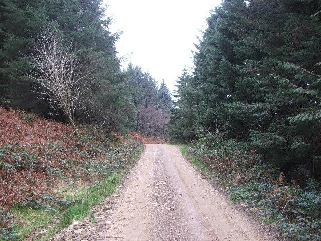 Forestry near Kildonan.