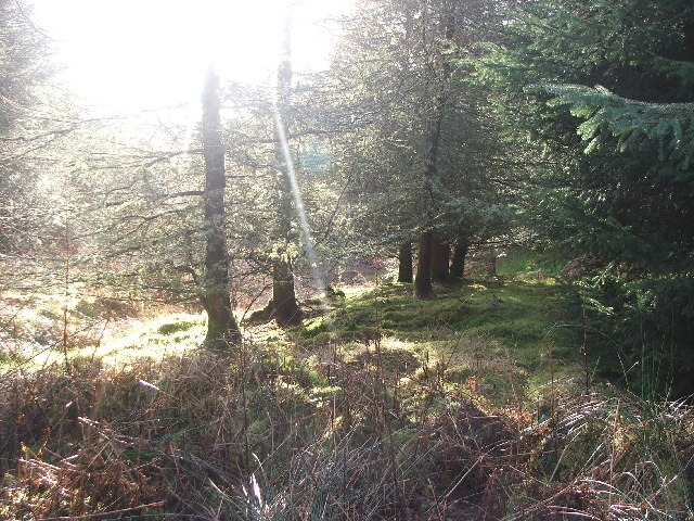 Black Loch Forest.