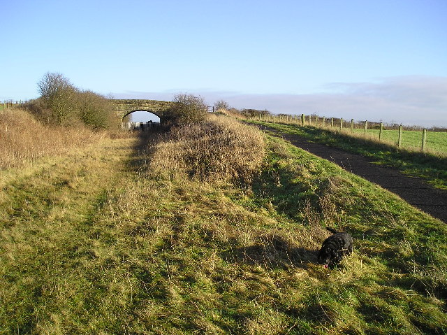 Cycle Path and Dog