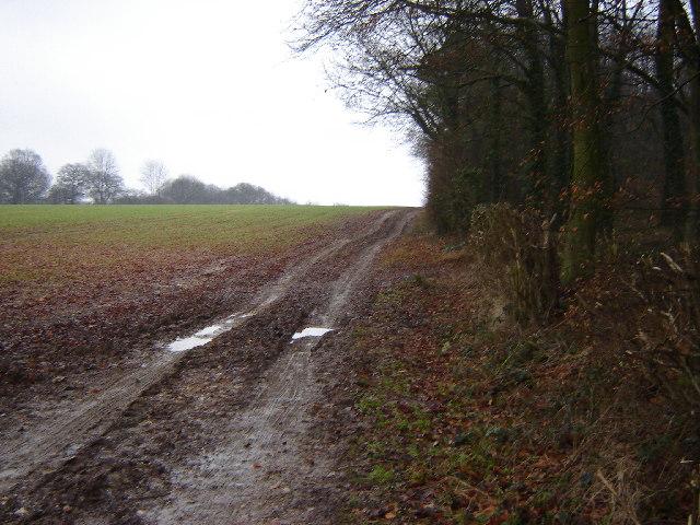 Fields near Bentworth