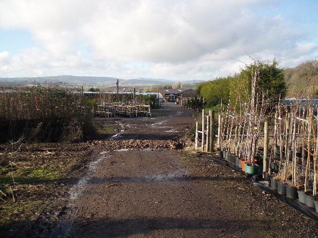 Wibble Farm Nurseries.