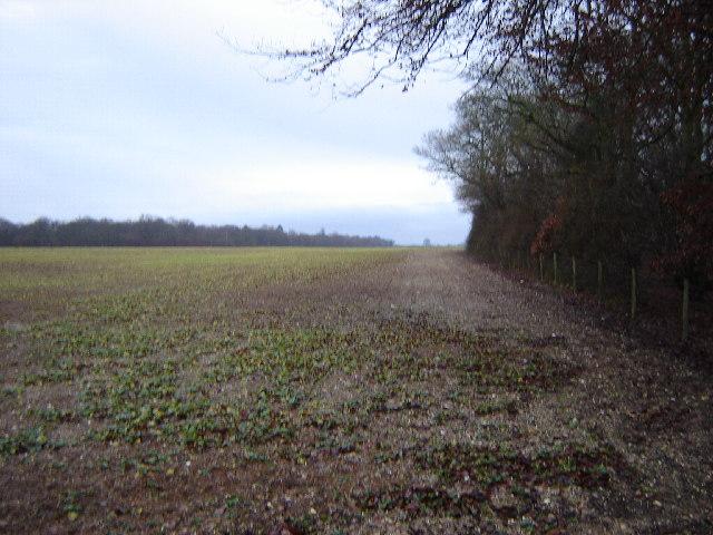 Fields near Popham