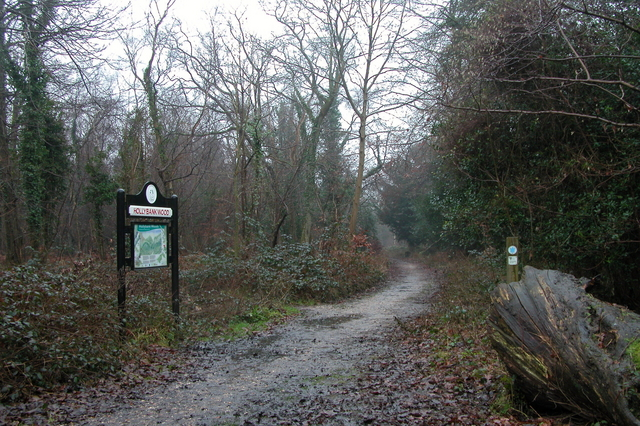 Footpath in Hollybank wood, in the  Forest of Bere.