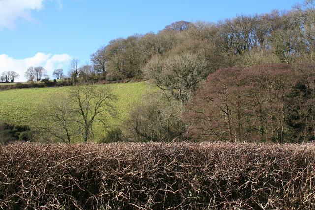 Bickleigh: Burn valley near Shotash Farm
