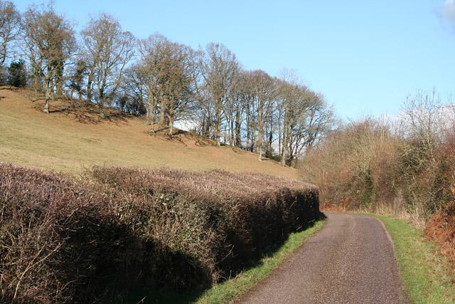 Bickleigh: copse near Lower Dorweeke