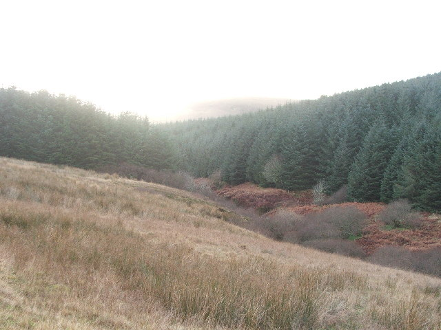 Burn entering Black Loch Forest.
