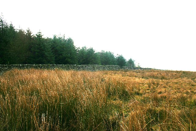 Rough Pasture and Commercial Forest