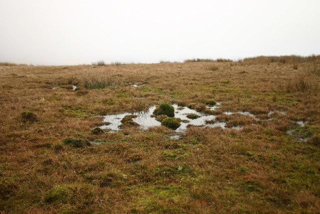 Sphagnum Bog, Ponsonby Fell