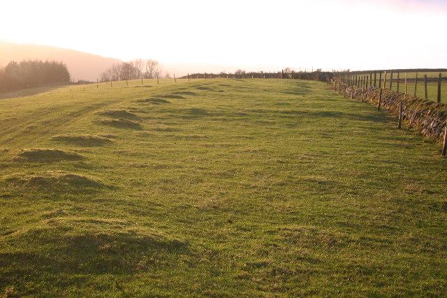 Spotty Field