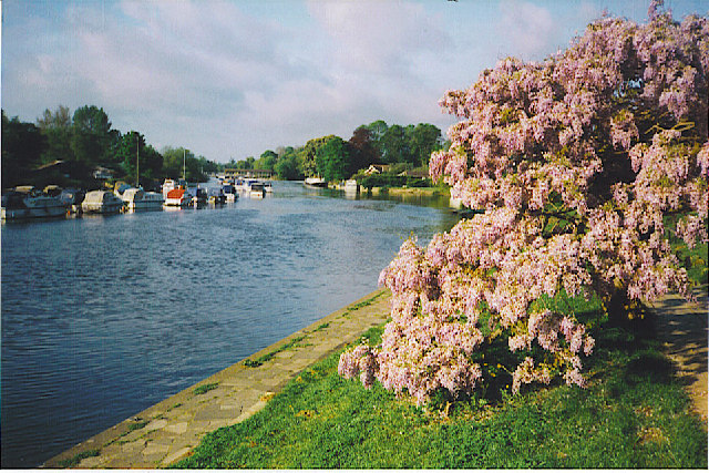 The Thames at Sunbury