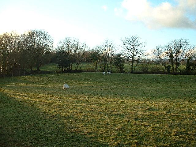 Farmland at Llannerch