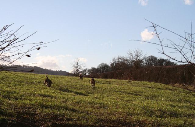 Silverton: a hunt