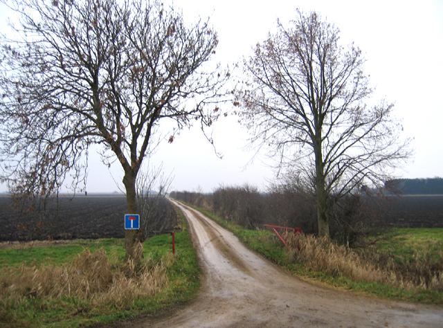 Farm track, Tongue End, Lincs