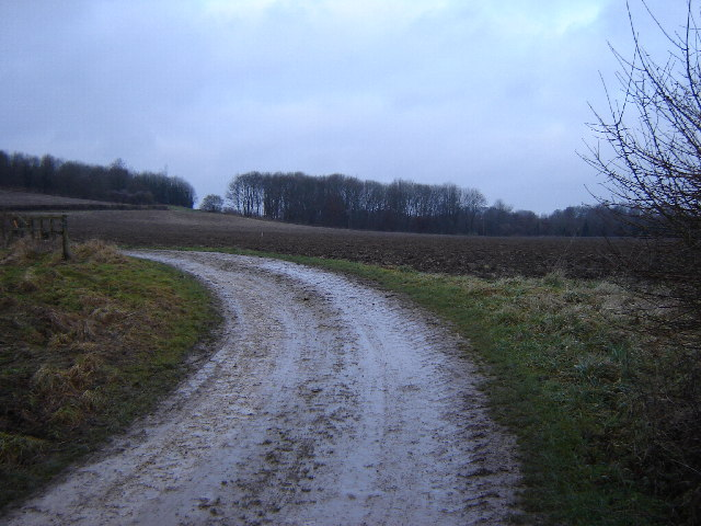Three Acre Copse near Farringdon