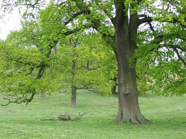 Fawsley Park