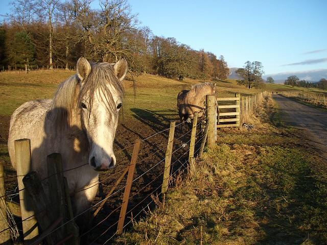 Horses near Blair Castle