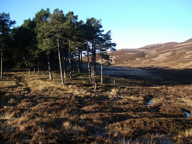 Edge of Glen Banvie Wood